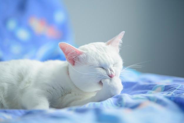 Witte kat in donkere kamer donker concept