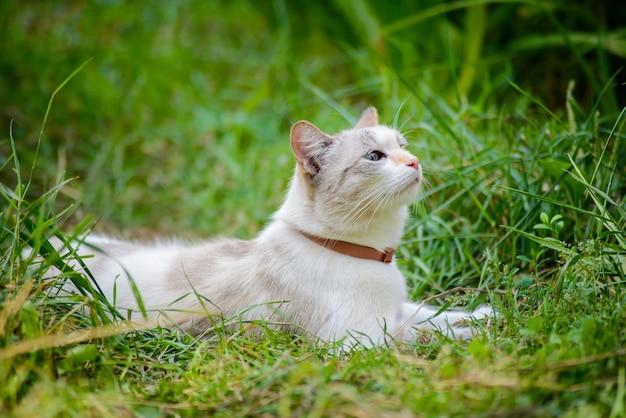 Witte kat in groen gras