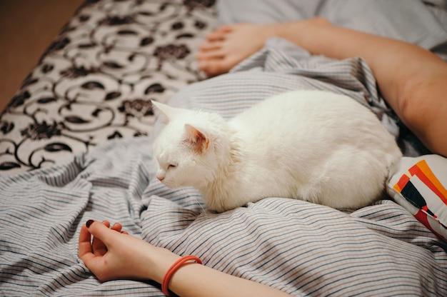 Witte kat is op het bed. vrouwelijke lichaamsdelen. vrouwelijke hand en been.