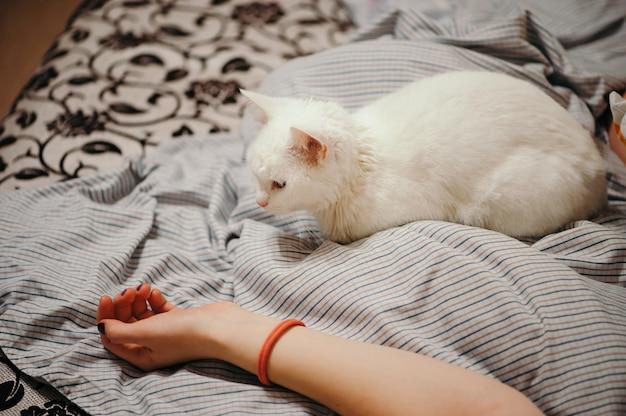 Witte kat ligt op het bed. vrouwelijke lichaamsdelen. vrouwelijke hand