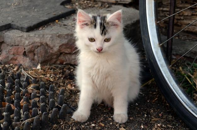 Witte kat mooie jonge vacht huisdieren