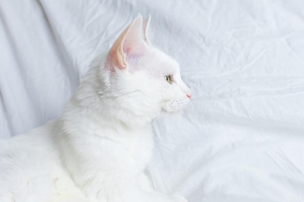 Witte kat op een wit laken. het concept van huisdieren, comfort, zorg voor dieren, katten in huis houden. lichtbeeld, minimalisme, copyspace.