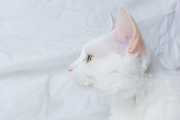 Witte kat op een wit vel. concept van huisdieren, comfort, dieren verzorgen, katten in huis houden.