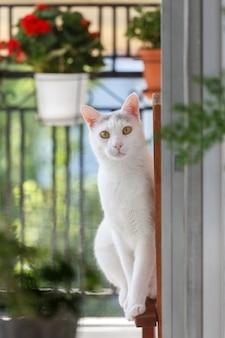 Witte kat portret