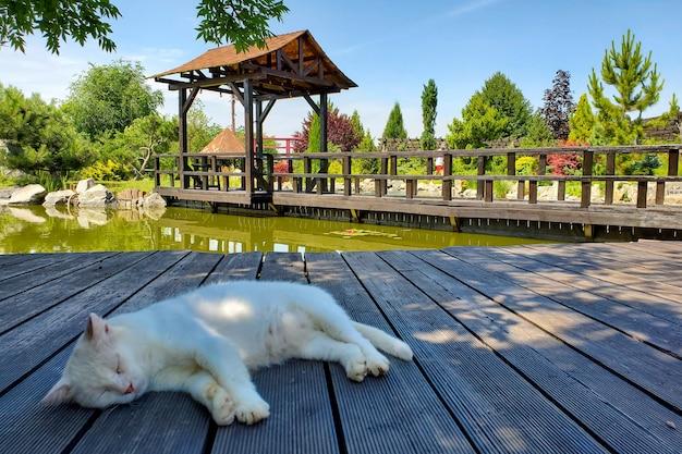 Witte kat slaapt in de natuur bij het meer