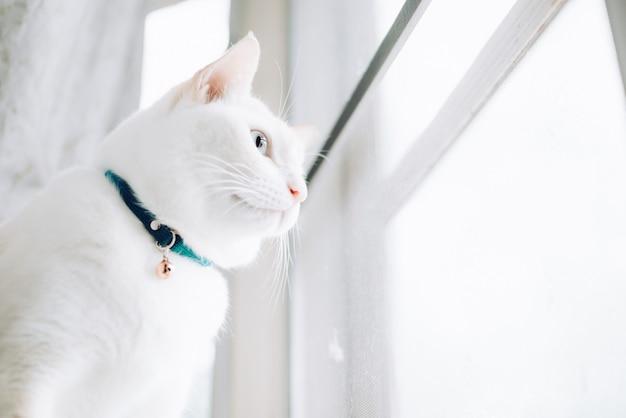 Witte katten die op vensterbank zitten en aan een venster met ochtendlicht kijken, kat die uit het venster op een zonnige dag kijken