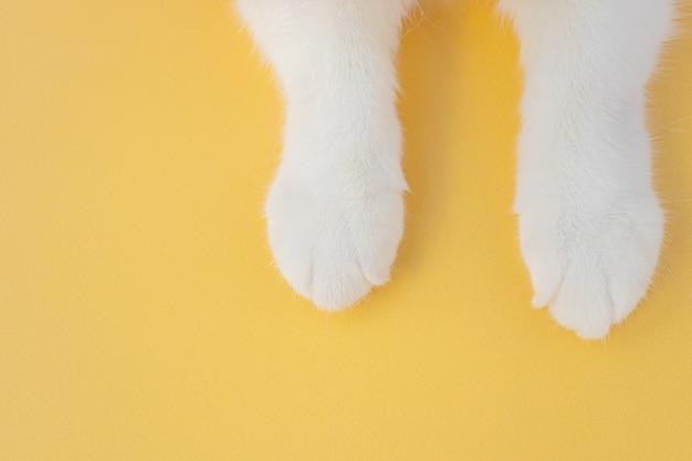 Witte kattenpoten op een gele achtergrond. bovenaanzicht, copyspace. het concept van huisdieren, kattenverzorging, diergeneeskunde, dierentuin.
