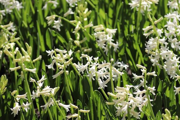Witte kleine bloemen groene grote bladeren en witte bloemen