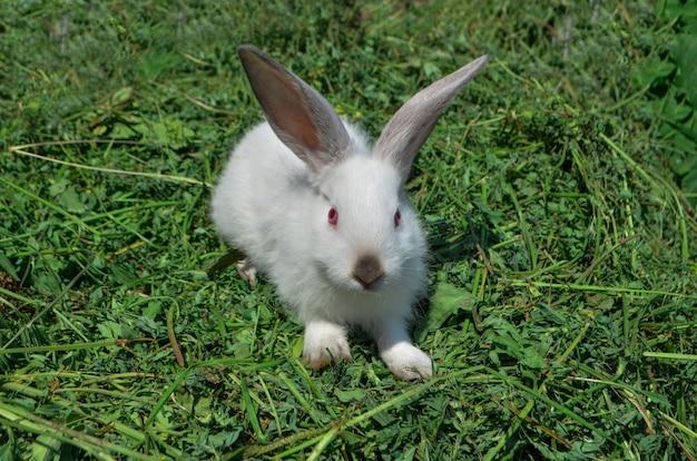 Witte konijn zittend op groen gras