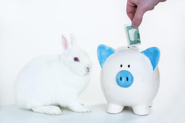 Witte konijntjeszitting naast blauw en wit spaarvarken met hand die geld op witte achtergrond aanzetten