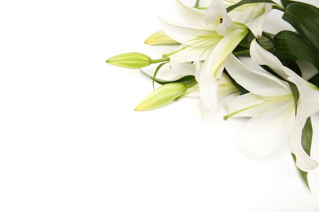 Witte lelie bloemen geïsoleerd op wit