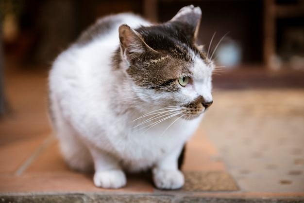 Witte, lieve kat