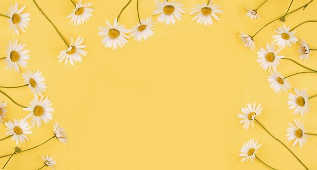 Witte margriet bloemen op lichtgele achtergrond. vakantie of gezond medisch concept. hoge bovenaanzicht.