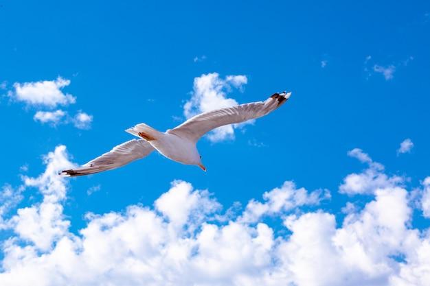 Witte meeuw die in de hemel hangt. bird's vlucht. zeemeeuw op blauwe hemelachtergrond