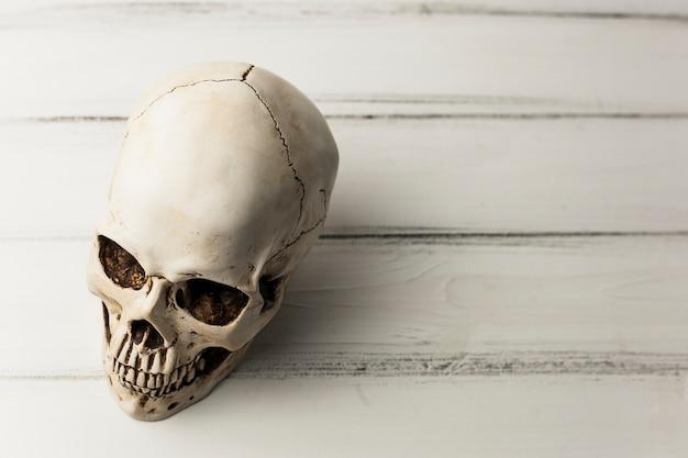 Witte menselijke schedel