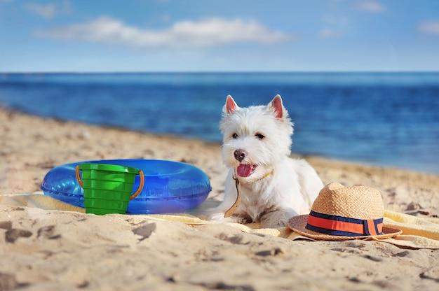 Witte mooie hond op het strand met speelgoed