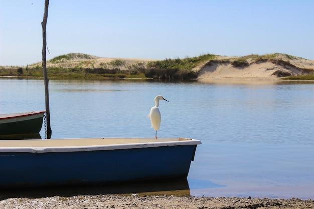 Witte mooie vogel op een blauwe boot over de blauwe rivier op het braziliaanse strand. guarda do embau, santa catarina.