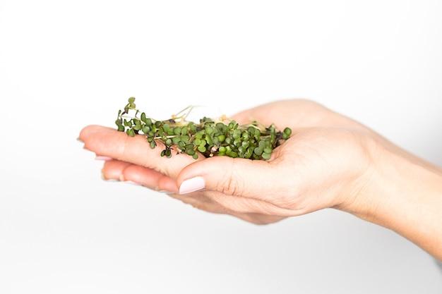 Witte mosterd microgroene spruiten liggen op de handpalmen van vrouwen.