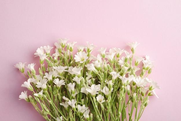 Witte muis-oor vogelmuur bloemen op roze tafel, bovenaanzicht kopie ruimte