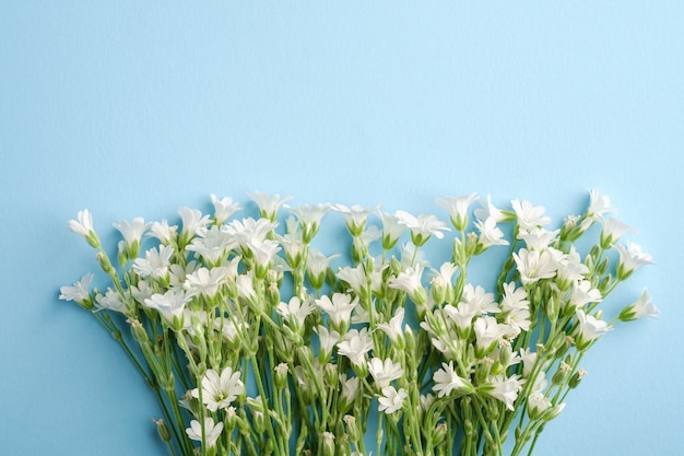 Witte muisoor-vogelmuurbloemen