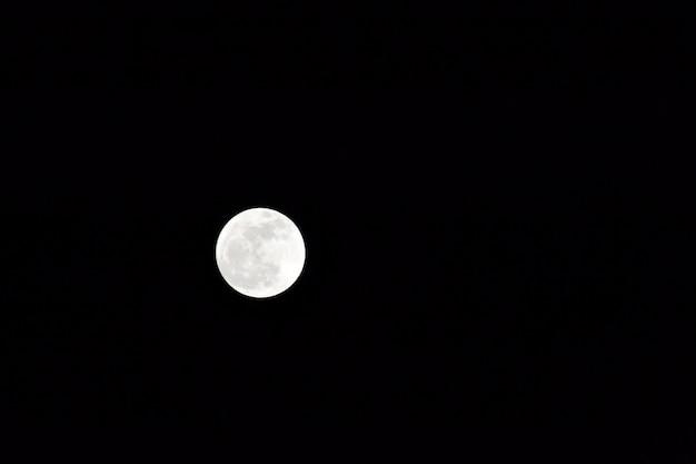Witte nacht moon wolf vrij