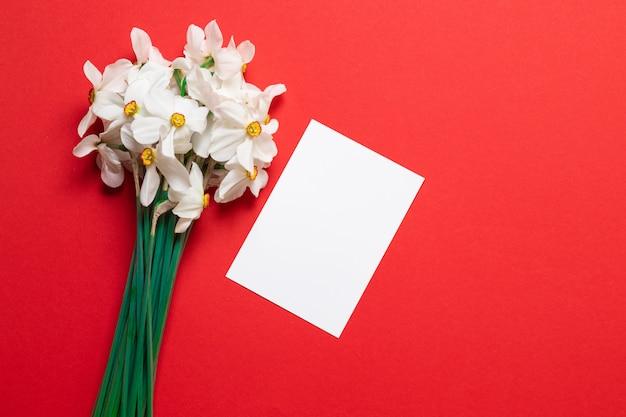 Witte narcis of gele narcisbloemen op rood