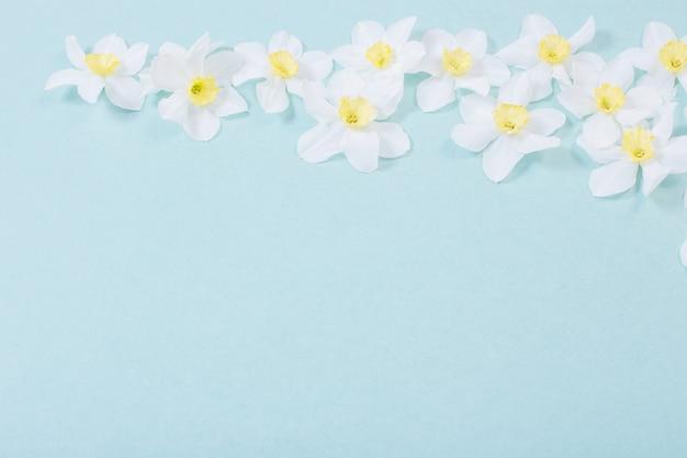 Witte narcis op blauw papier oppervlak