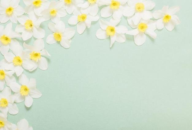 Witte narcis op groenboekoppervlak
