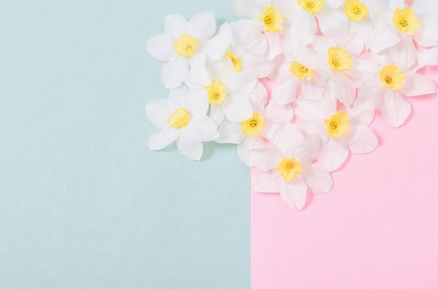 Witte narcissen op roze en groenboekachtergrond