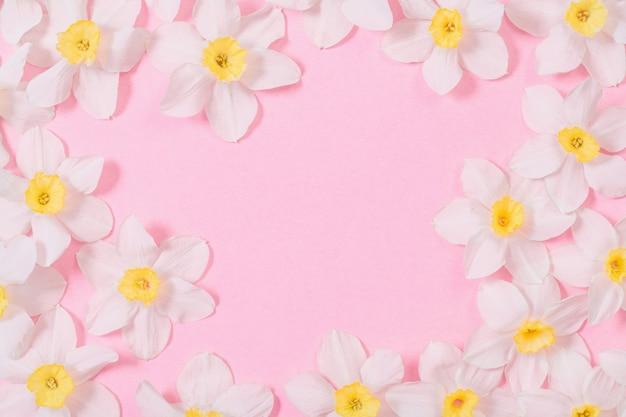 Witte narcissen op roze papier achtergrond