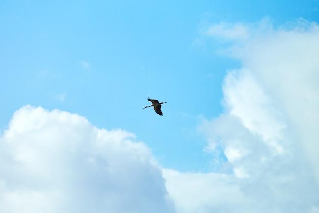 Witte ooievaar die in de hemel vliegt
