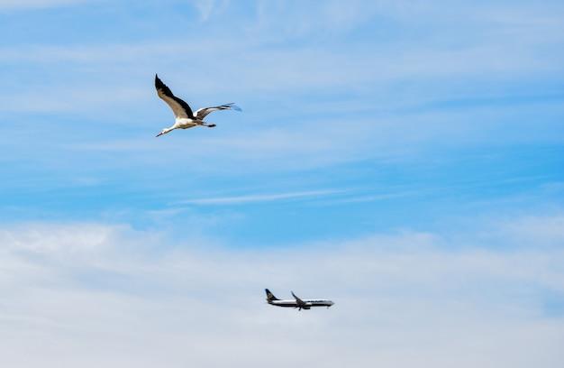 Witte ooievaar en vliegtuig