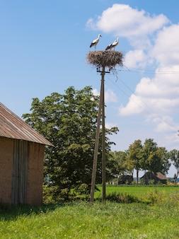 Witte ooievaarsvogels op een nest tijdens de broedperiode in de lente