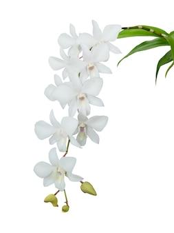 Witte orchidee geïsoleerd op wit. bestand bevat met uitknippad dus gemakkelijk te bewerken.