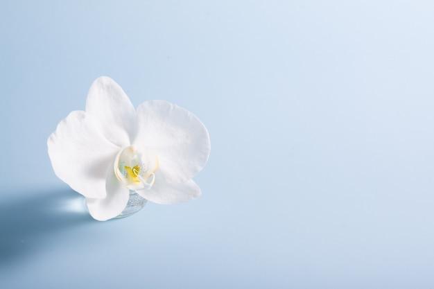 Witte orchidee in miniatuurvaasje op blauwe ondergrond