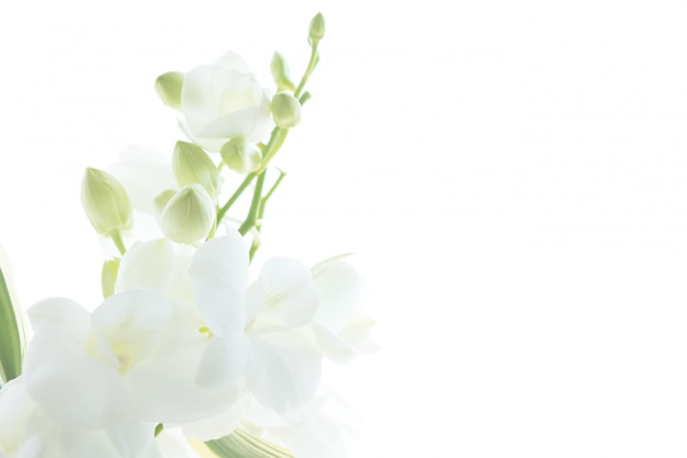 Witte orchidee op witte achtergrond