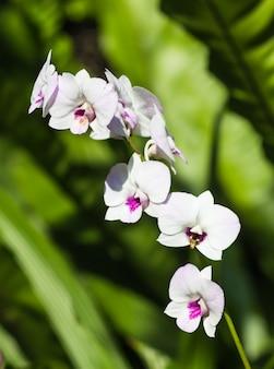 Witte orchideebloemen met groen