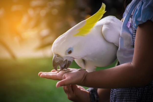 Witte papegaai die voedsel op de hand eet.