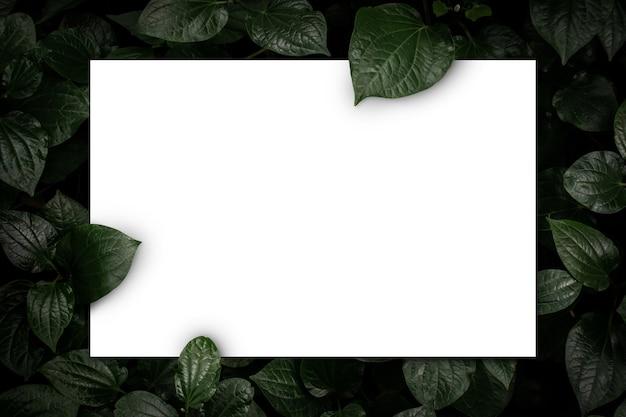 Witte papieren kaart op groene bladeren bovenaanzicht achtergrond creatieve lay-out in de natuur concept