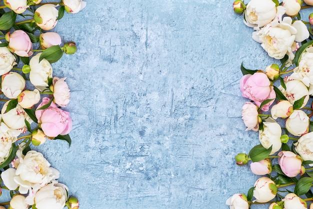 Witte pioenengrens op blauwe kaderachtergrond