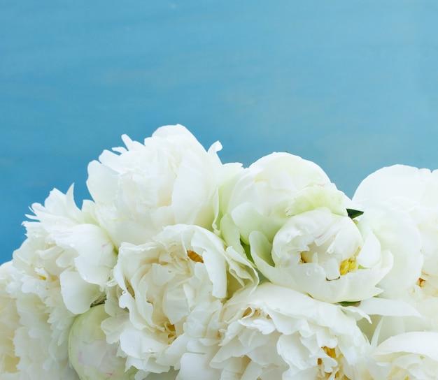 Witte pioenroos bloemen op blauwe achtergrond