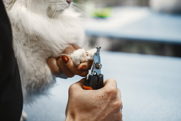 Witte pluizige kat. dierenarts met katten. dieren op de bank.
