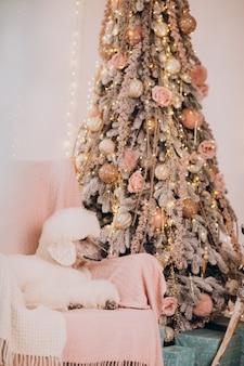Witte poedel zittend bij de kerstboom
