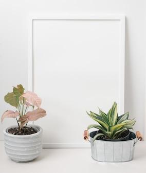 Witte posterlijstdecoratie met slangenboom en roze syngonium op trendy ingegoten over witte muurachtergrond, kopieer ruimte voor uw ontwerp