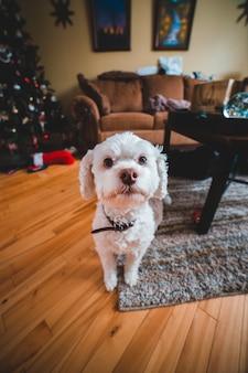 Witte puppy met krullen