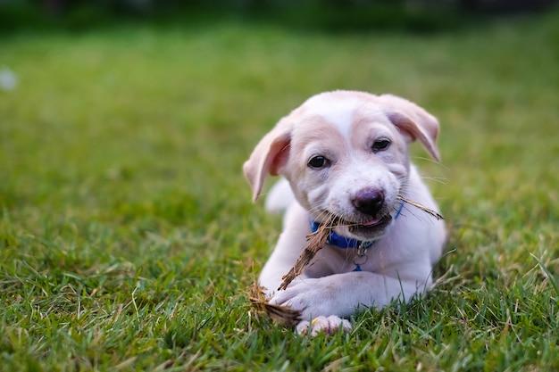 Witte puppy spelen in de groene tuin.
