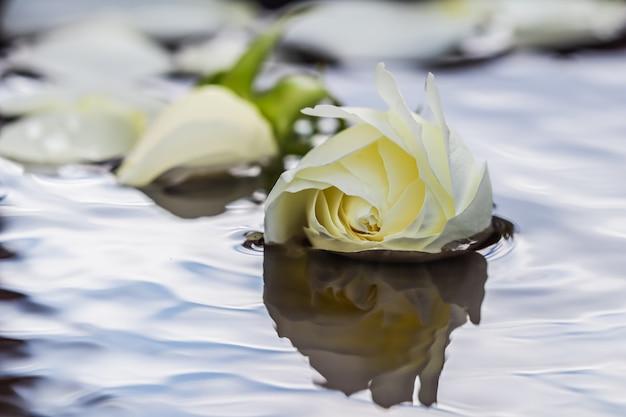 Witte roos en bloemblaadjes op het wateraromatherapie en spa-concept