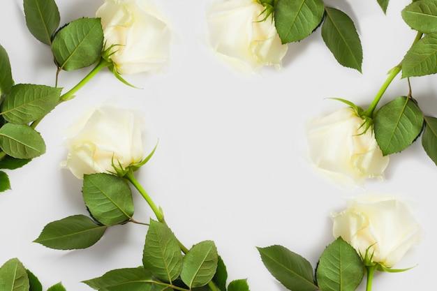 Witte roos op een witte muur, met plaats voor tekst, met kopie ruimte. concept zachte muren met bloemen, muren voor bloemenwinkels, bruiloftsteksten, ondergoed en parfum.