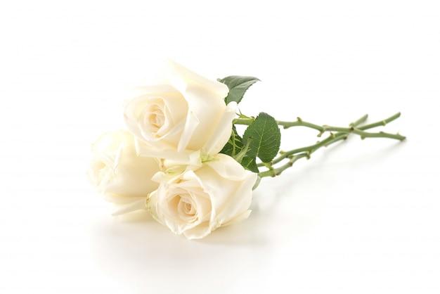Witte roos