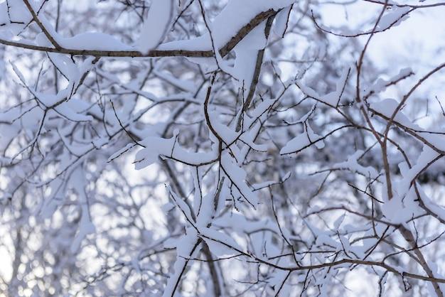 Witte sneeuw op een kale boomtakken op een ijzige winterdag, close-up